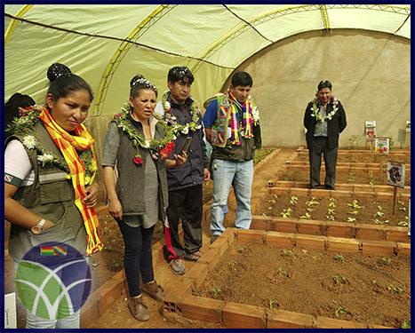 <span id='sec'>Sacaca - Potosí:</span><br><span id='prim'>FONADIN fomenta la producción de alimentos nutritivos en Sacaca, Potosí</span>