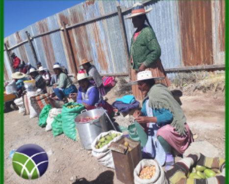 <span id='sec'>En Llallagua - Potosí:</span><br><span id='prim'>FERIAS FORTALECEN LA PRODUCCIÓN AGROPECUARIA DE LLALLAGUA</span>