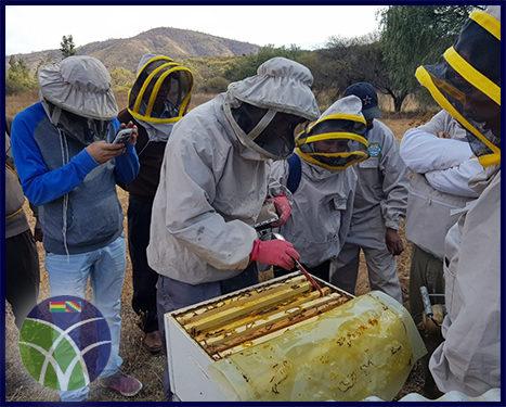<span id='sec'>Cochabamba:</span><br><span id='prim'>Gobierno brinda asesoramiento técnico a productores de miel</span>