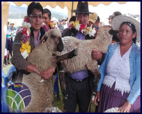 <span id='sec'>Vacas - Cochabamba:</span><br><span id='prim'>Familias del municipio de Vacas se beneficia con ganado ovino</span>