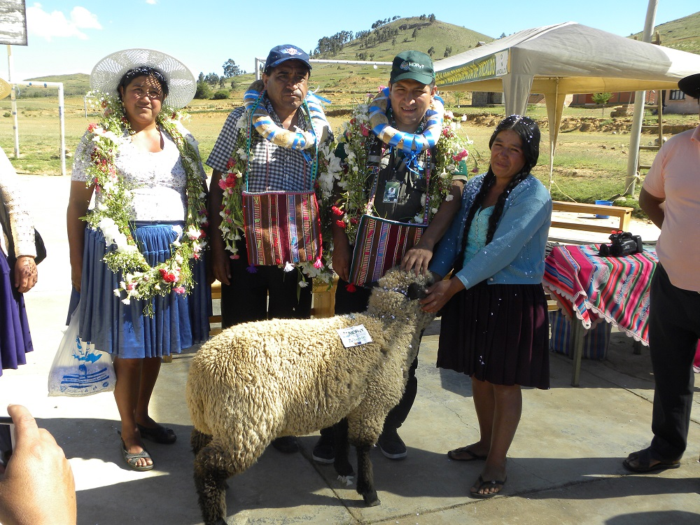 Entrega ganado ovino para mejoramiento de producción, Anzaldo-Cochabamba