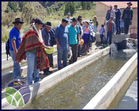 <span id='sec'>Vacas - Cochabamba:</span><br><span id='prim'>En Cochabamba, Gobierno entrega criadero de truchas en el municipio de Vacas</span>